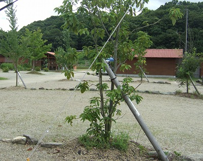 ACN OKキャンプ場
