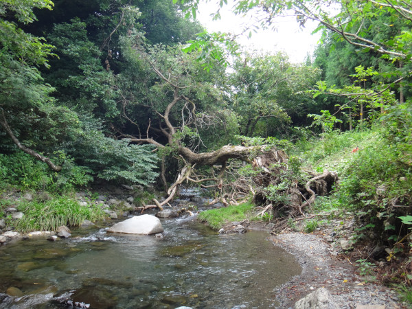 川遊びキャンプin 滝と清流の高山キャンプ場(8/8~9)その2